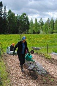 Liisa Pirilän talkoopäivät ovat monipuolisia. Työtä tulee tehtyä myymälässä, puutarhalla, keittiöllä ja kirkossa laulaen, aina tarpeen mukaan.